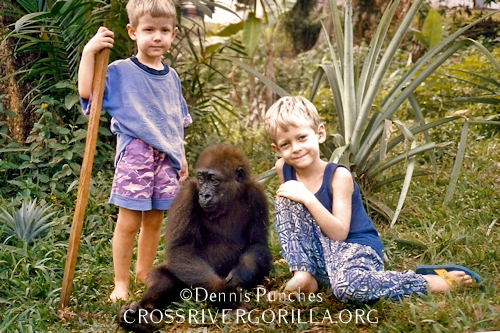 Dustin and Nate with Nyango, the Baby Cross River Gorilla in South West Cameroon