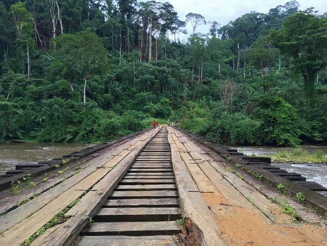 BANCK Community Forest in Forest Corridor Approved by Cameroon Government