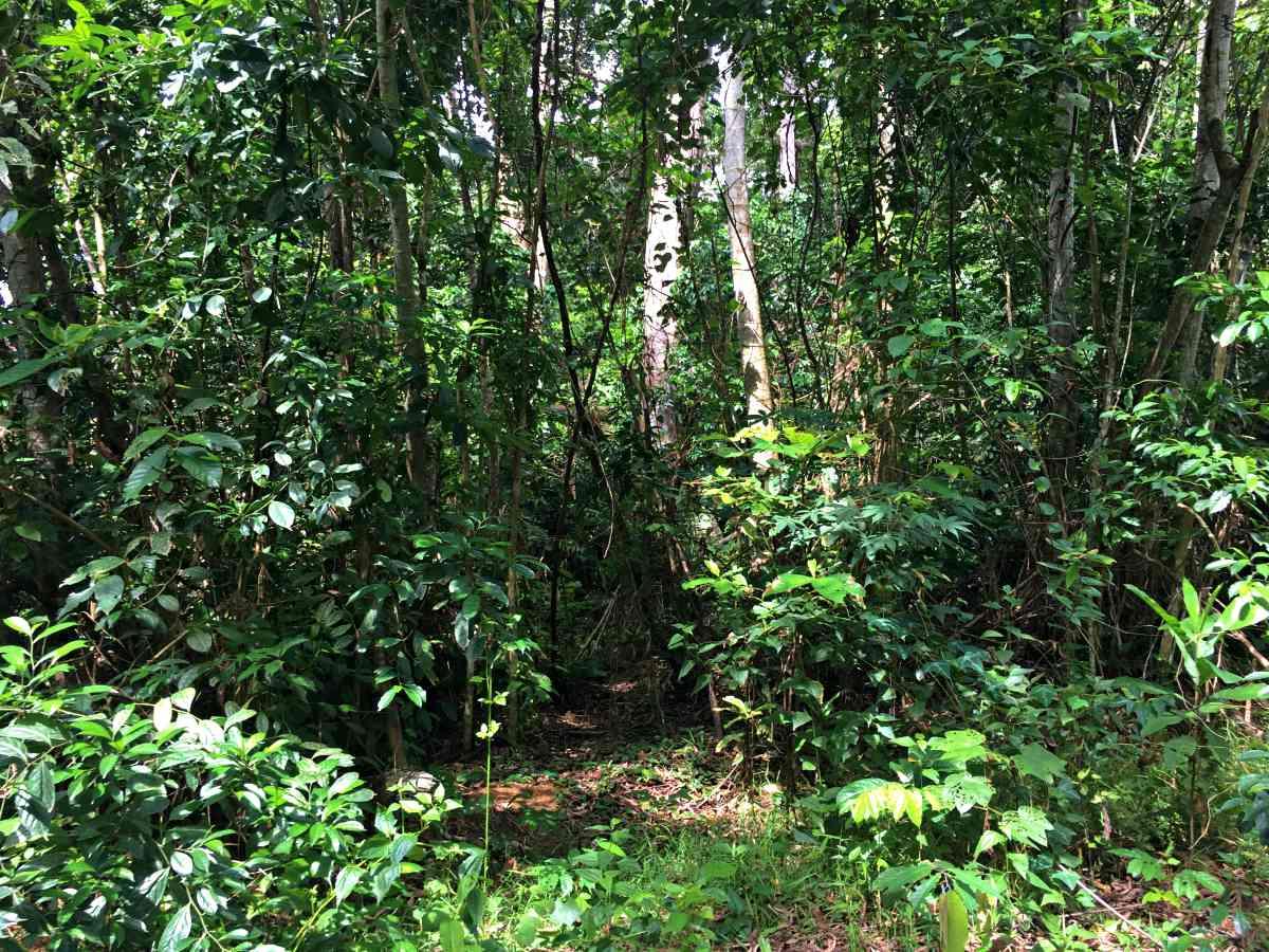 Update on the development of Mak-Betchou Wildlife Sanctuary