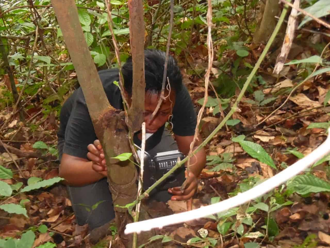 Gwendolyn Angwa installs a camera trap in Tofala Hill Wildlife Sanctuary.