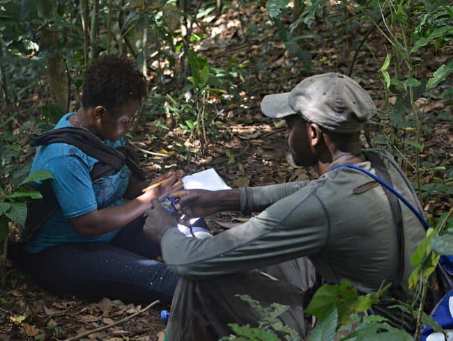 Cameroon women in conservation science: Research reveals increasing chimpanzee population in new reserve
