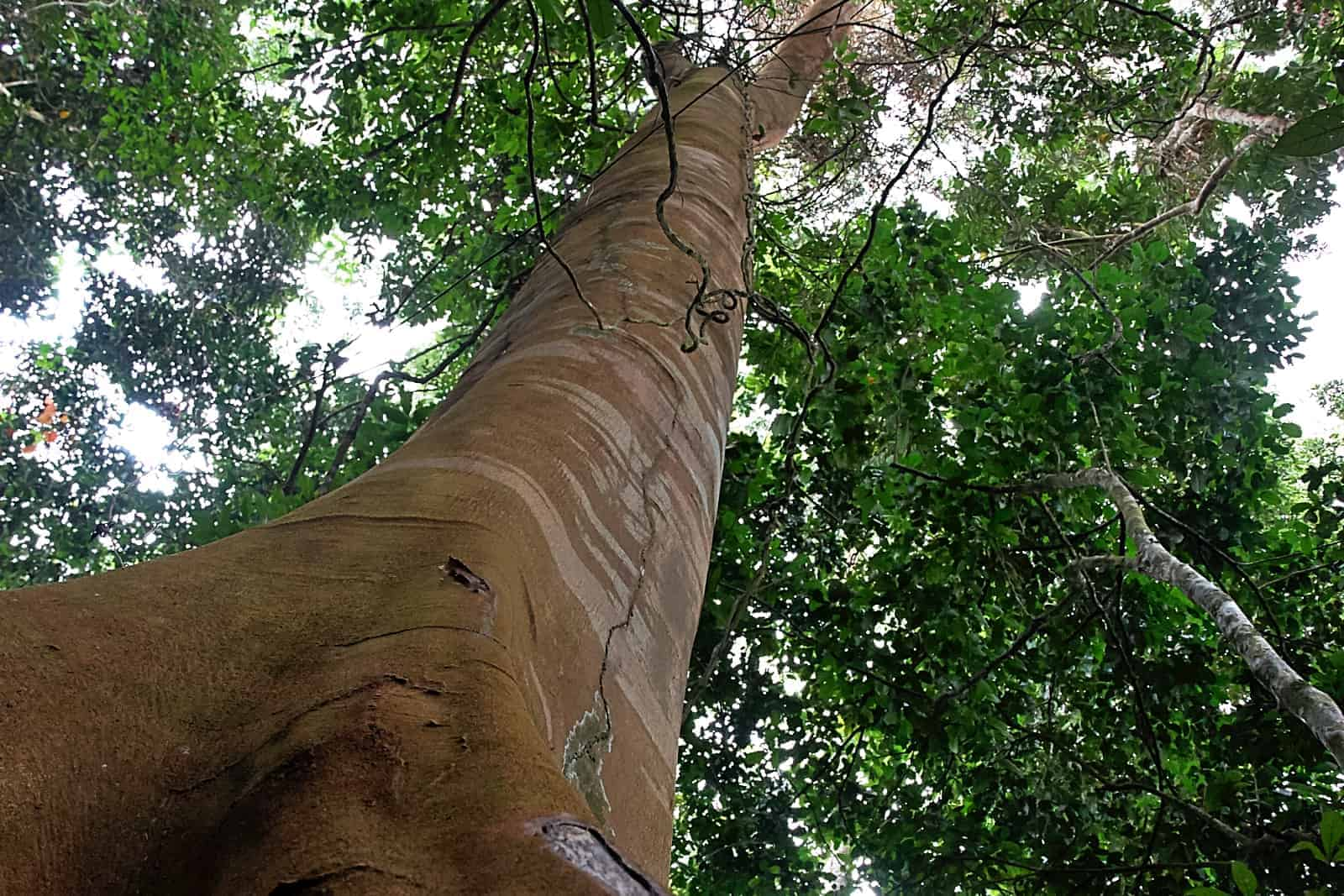 Community based approach the key to rainforest conservation